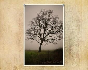 Nature Photography   Tree Photo   Foggy Morning   Ethereal   Country Photo   Dreamy Photography   Oregon Photo