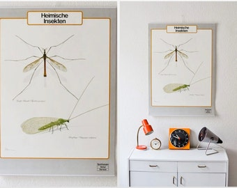 Vintage German educational poster pull down chart native insects school map zoological biology