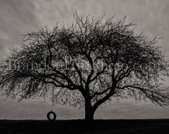 Tire Swing Apple Tree Farm Honeycrisp Black and White photo