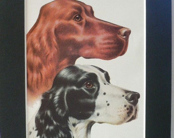 IRISH ENGLISH SETTER Dogs Vintage Mounted 1958 Walter A Weber dog plate print Unique Thank you, Congratulations, Birthday gift