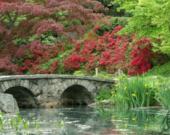 Spring Park Lake Landscape, Japanese Gardens at Maymont Park in Richmond Va. Photo Art, 8x10, Framed Photography Option