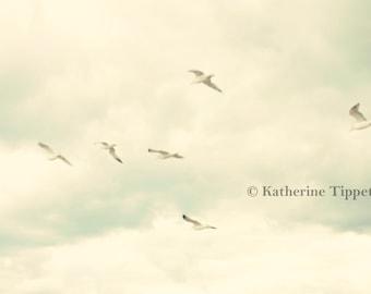 Birds in Flight - Fine Art Photograph - Katherine Tippett