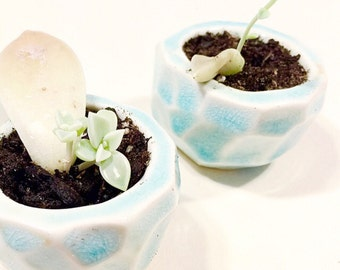 Little Geo Planter In Turquoise Perfect Gift MADE TO ORDER