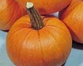 New England Sugar Pie  Pumpkin Heirloom Seeds Non GMO