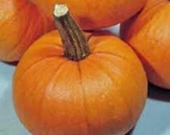 New England Sugar Pie  Pumpkin Heirloom Seeds Non GMO