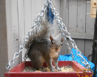 Hanging Platform Squirrel Feeder
