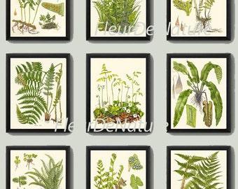 FERN Print SET of 9 Botanical Art Print 8X10 Lindman Antique Green Ferns Roots Chart Forest Summer Plant Nature to Frame Home Decor Garden
