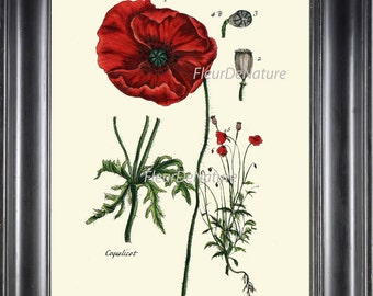 BOTANICAL PRINT 8x10 Art 11 Beautiful Papaver Red Opium Poppy Antique Vintage Chart Seeds Art Painting Plate Garden Flower Decor to Frame