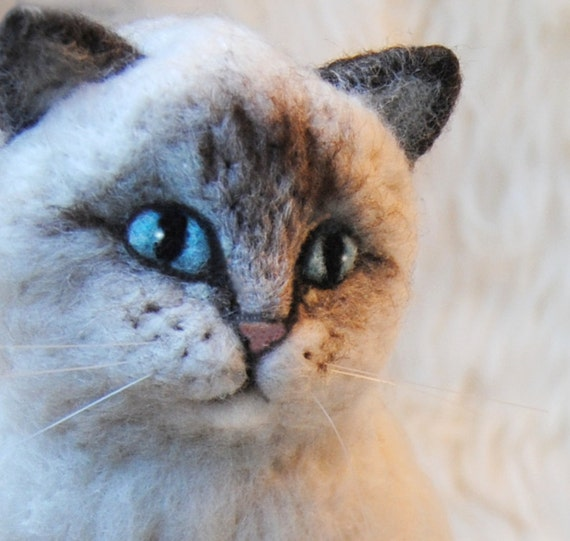 grey kitten with blue eyes