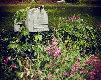 Country Rustic Mailbox in Pink, Purple Flowers - Spring Blossoms in Jonesborough, Tennessee - Home Decor Photography
