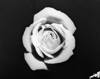 The Rose  - 16x20 silver gelatin print unframed