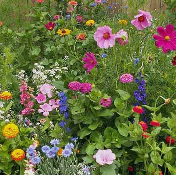 Cottage Flower Gardens: BULK 10000 Cottage Garden Mix Cover A Large Area Attracts