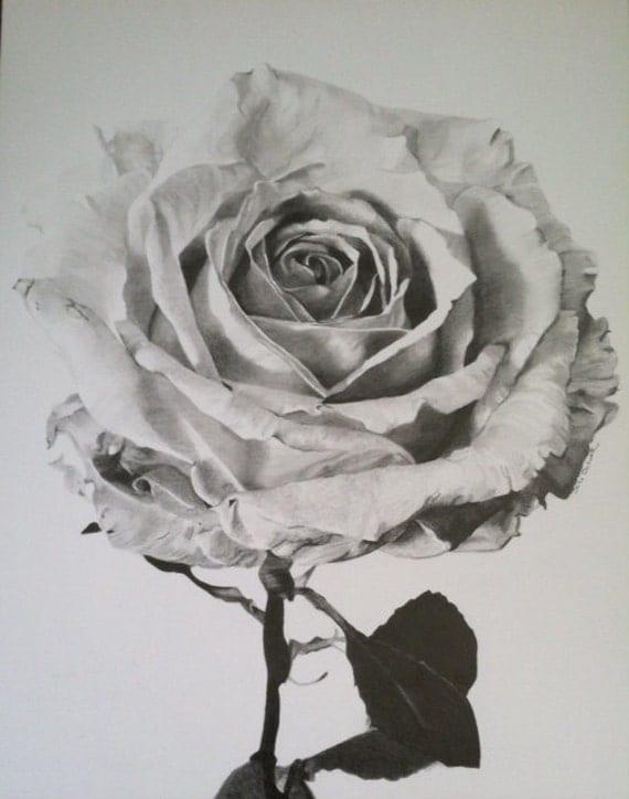 rose graphite drawing by denischuetzdesigns on etsy. Black Bedroom Furniture Sets. Home Design Ideas