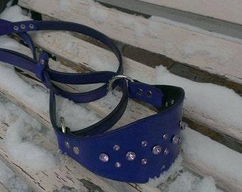 Martingale Collar/leash