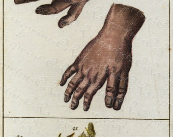Antique Original human physiology Engraving by Wilhelm Tobias -  Human anatomy- Human feet and hands