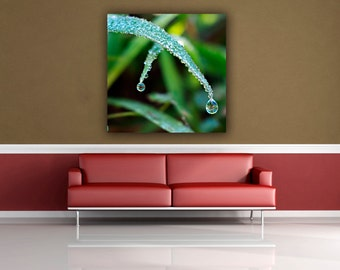 Green Grass Dew Drop Macro Photograph, Water Drop Photography, Fine Art Close Up Nature Photo Print, Square Wall Art Home Decor