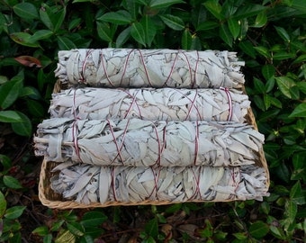 1 Large California White Sage (Salvia Apiana) Bundle 8~9 inches, wild harvested, Reiki infused