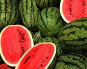20 - Heirloom Watermelon Seeds - Jubilee - Heirloom Jubilee Melon Seeds, Jubilee Watermelon Seed, Non-gmo Watermelon Seeds, Non-GMO Seeds