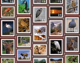 8x10 Nature Photographs - Nature Prints - Bird Print -  Bird Photograph - Wildlife Print - Wildlife Photograph (PRNT)