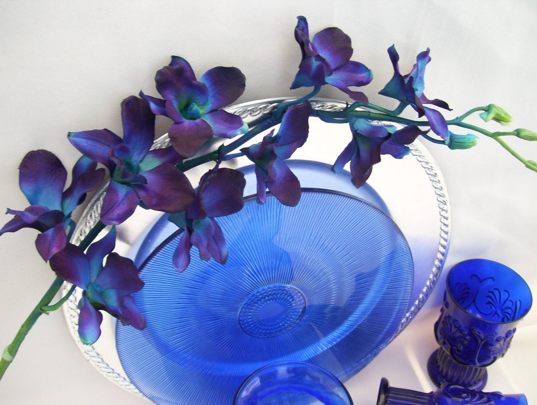 4 Stems Blue Violet Ca Dendrobium Orchids Galaxy Singapore
