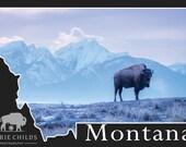 Montana Postcard- Bison Morning Breath