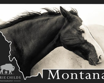 Montana Postcard- White Eyelashes