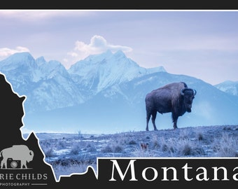 Montana Postcard- Bison Morning Breath
