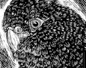 Black Cockatoo lino cut print