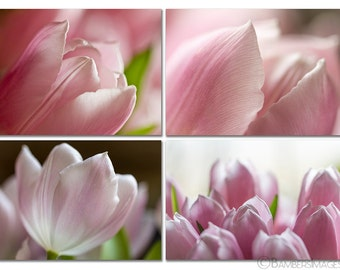 "Pink Tulip Photo Series, Flower Photography, Second Set, 4 prints - 5"" x 7"", Wall Art, SET OF 4 Tulips prints, Fine Art Photography Prints"