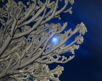 Moonlight Snow (18) - Digital Photo for Download - A Snow scene on a Beautiful Moonlight night - Jerusalem mountains. Nature Scene photo
