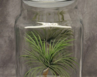 Hand painted, Palm Tree Kitchen Canister