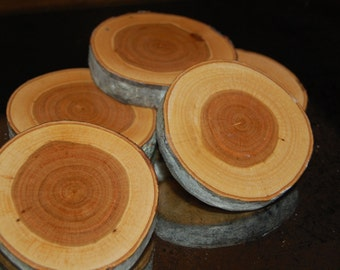 Set of Ten Small Black Cherry Wood Slab / Wood Disk with bark (end cut)