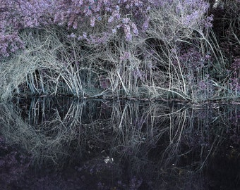 Black Water- Surreal Fine Art Landscape Print of Reflections in the Everglades