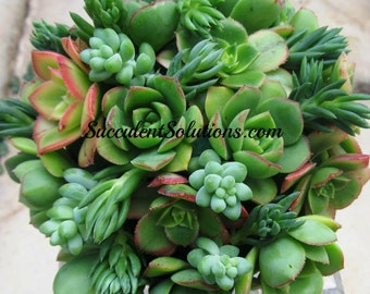 Sweetheart Succulent Wedding Bouquet in cool greens and hints of blush.....lovely and romantic.