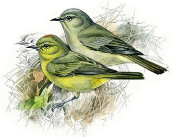 Chestnut-crowned Warbler watercolour - bird art, wildlife art - nature print of original artwork