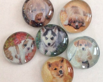 Puppy glass magnet dog glass magnet set. Cute puppy glass magnet set will brighten up your fridge every time you see these adorable puppies