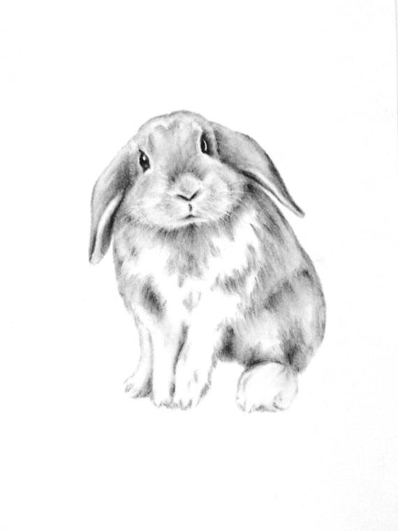 Bunny Rabbit Art ORIGINAL Rabbit Charcoal Drawing Bunny
