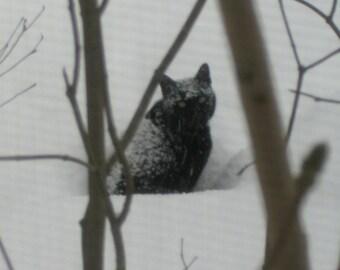Black Cat Under the Bird Feeder, Black Cat Photo, Black Cat in Snowstorm, Nature Photos, Cat Photos, Instant Download, No Shipping
