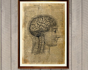 Human brain anatomy poster Cabin decor Dictionary print WA544