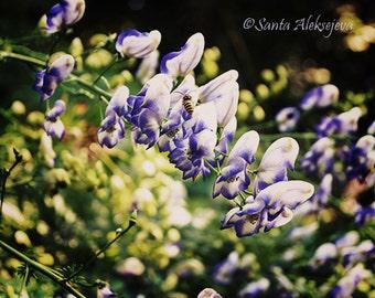 Purple Dream - Fine Art Photography -  botanical print, insect art, wasp art, home decor, wall decor, whimsical art, flower art, floral art