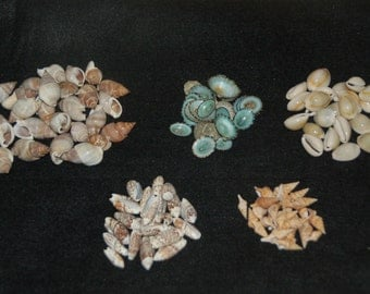 50 Seashell Crafting Mix (Limpet, Cowrie, Olive, Javana, Marginellas)
