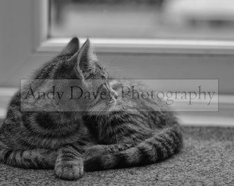 Silver grey tabby kitten photo in black and white, pet photography, animal photography,  silver tabby print, tabby cat photo