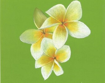 Print of an original pastel drawing of a Plumeria alba bloom