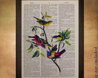 Painted Finch Dictionary Art Print Audubon Bird Wall Art Fine Art Print Home Songbird Decor Gift Ideas da645