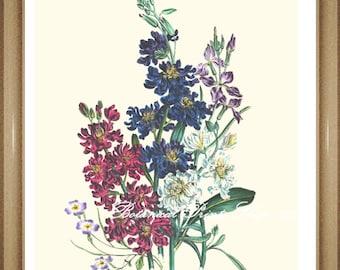 "Botanical Print. Flower Prints. Stock. Flower Art. Botanical Wall Art. 8x10"""