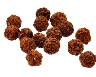 Mandala Crafts® Loose Rudraksha Beads, 100 pcs, Several Sizes Available