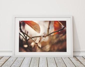 Untitled, Photographic Print