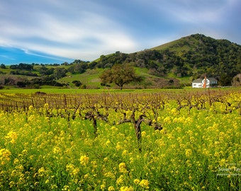 Wine Country Print, California Napa Valley Art, Spring Flowers Wall Decor, Vineyard Photo, Wine Valley Canvas, Mustard Fields Art, Fine Art