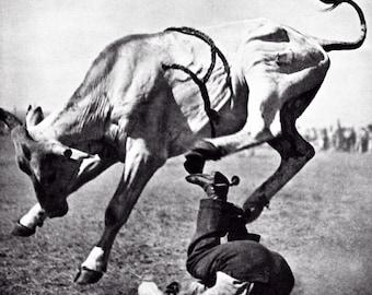 Bucking Bull poster, Bull Riding, Cowboy, Bull Rider, Rodeo