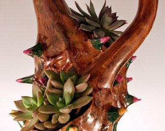 Dual gourd succulent and cactus hanging planter